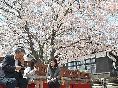 桜の下、茶わんの中も満開 松本「歴史の里」