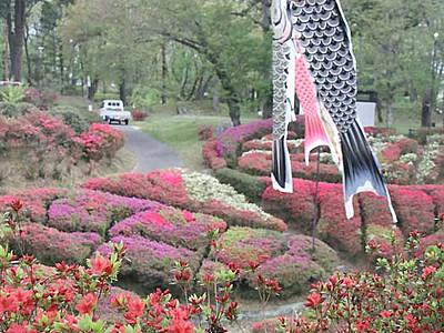 「台城」のツツジ鮮やかに 松川町の公園、3日祭り