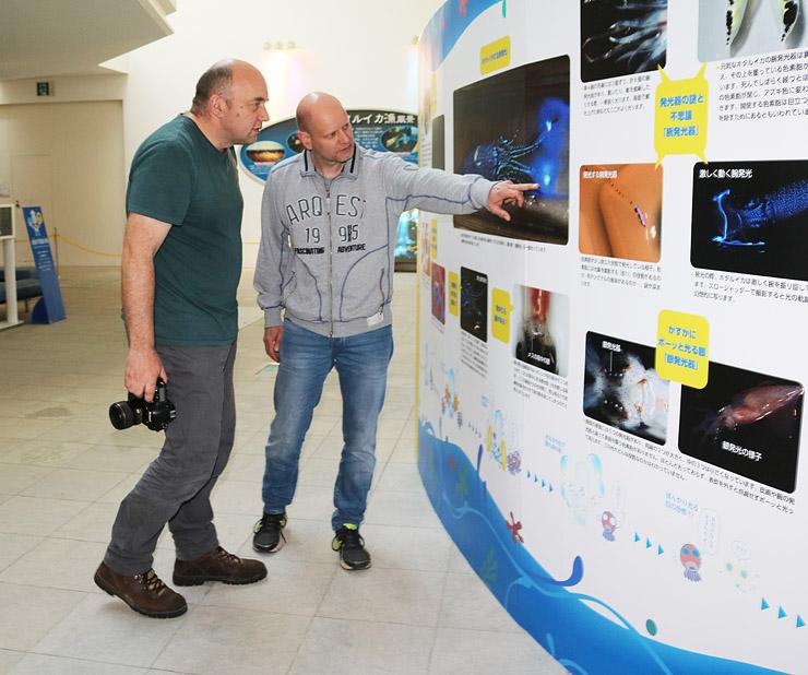 ホタルイカの生態を説明したパネルに関心を示すドイツ人観光客=ほたるいかミュージアム