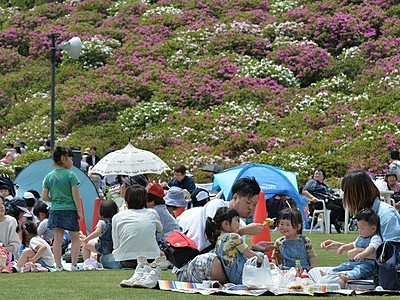 西山公園を彩るツツジ5万株 満開間近、家族連れら笑顔