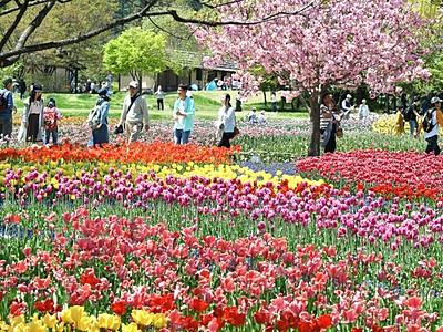 輝く花のじゅうたん あづみの公園堀金・穂高地区
