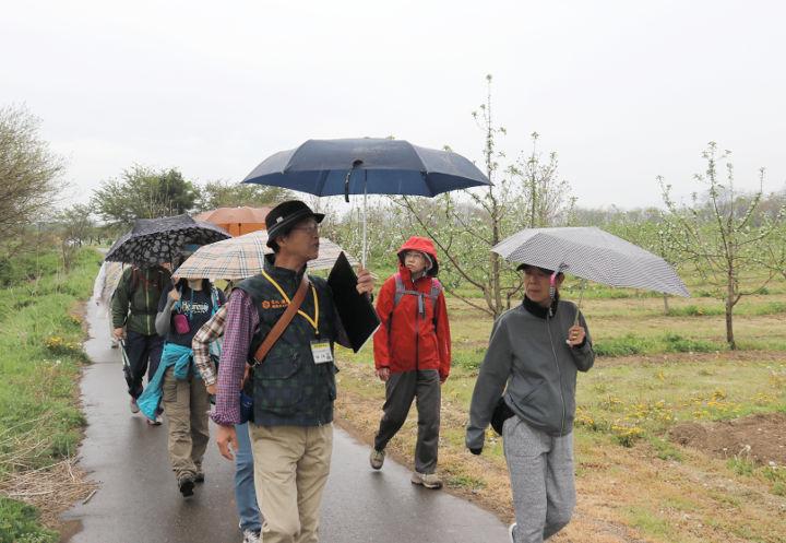 小雨の中、リンゴや桃などの畑の脇を歩く参加者