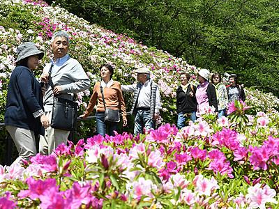 華やかツツジに笑顔 高岡の公園に1万5千本