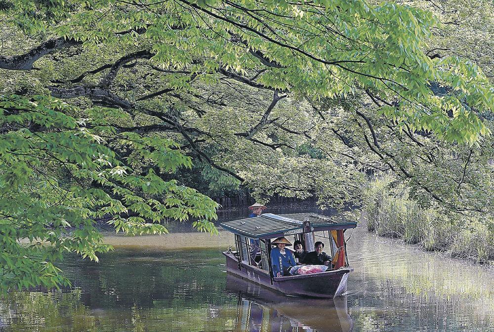 新緑のトンネルを進む流し舟=加賀市の旧大聖寺川