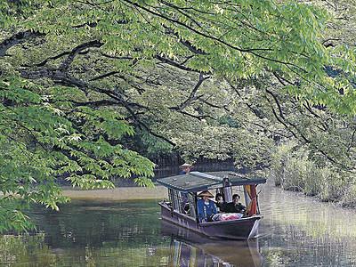 新緑くぐる流し舟 旧大聖寺川