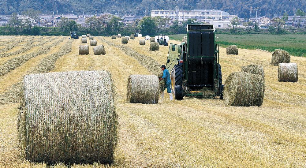 次々と作られる「牧草ロール」=内灘町の河北潟干拓地