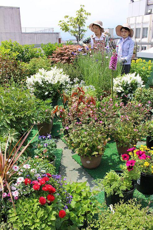 ガーデニング愛好家らが庭園を公開している「上越オープンガーデンと花めぐり」=12日、上越市本町5