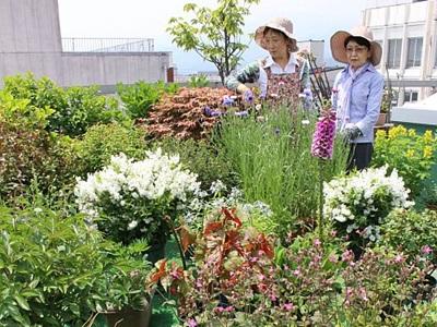高田の庭園25カ所公開 6月末まで