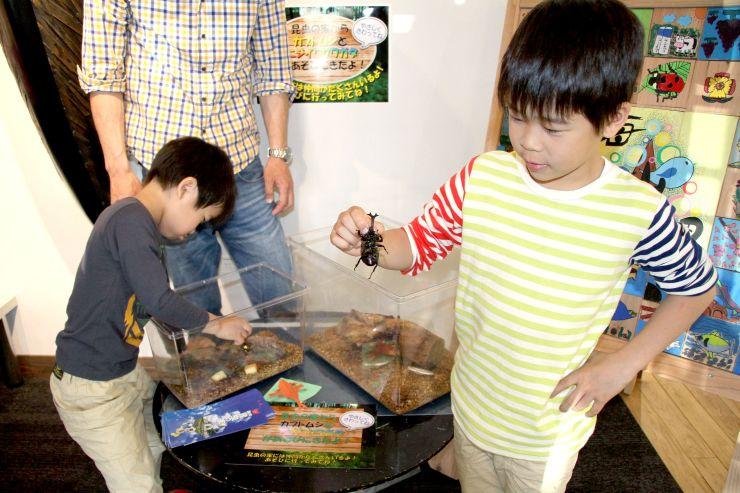 胎内市美術館にお目見えしたカブトムシと遊ぶ子どもたち=胎内市下赤谷