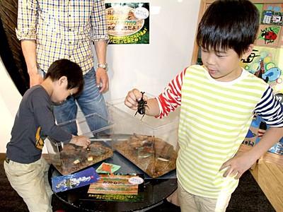 カブトムシ待ってるよ 胎内市美術館 昆虫コーナーを開設