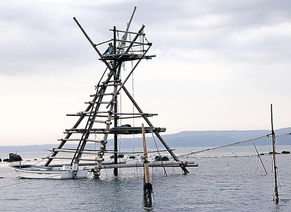 今季の漁が始まった穴水町伝統のボラ待ち櫓漁=同町新崎の七尾北湾