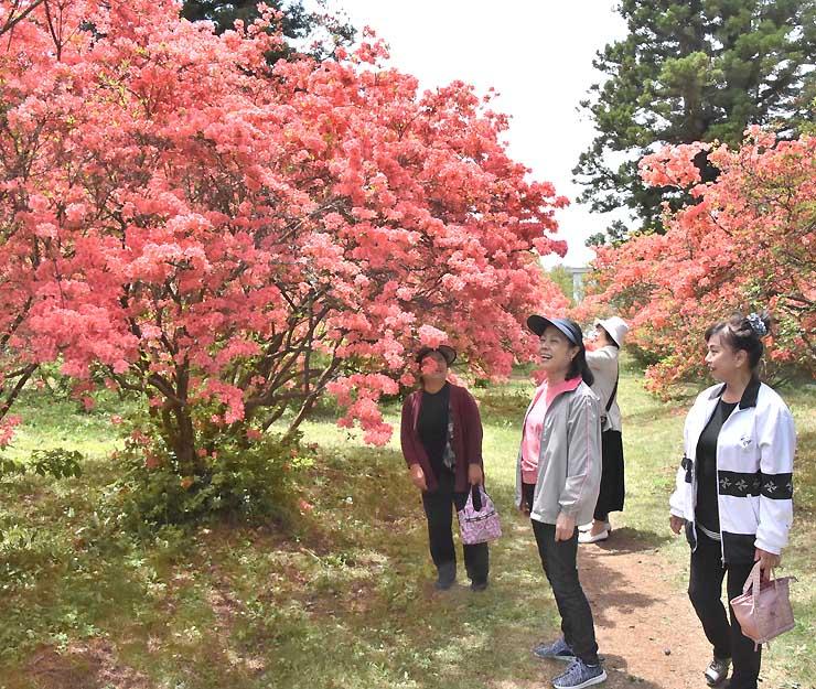 ツツジが咲き誇る御屋敷公園