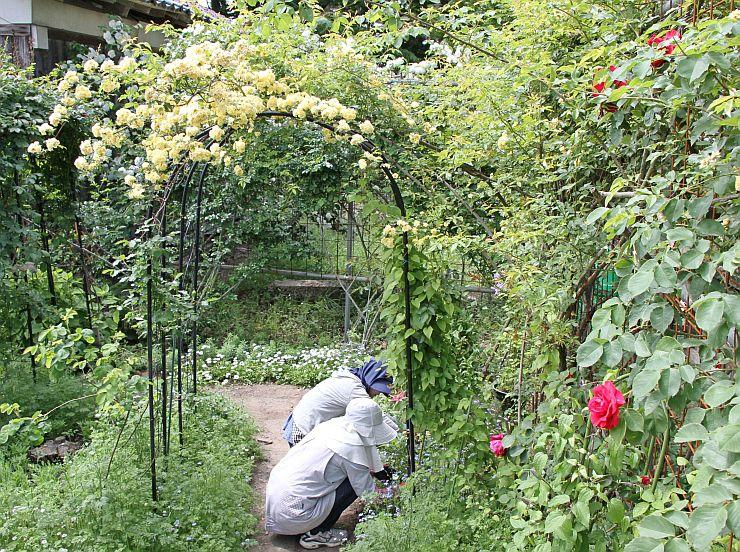400株以上のバラが植えられている二宮家のバラ園=18日、聖籠町蓮野