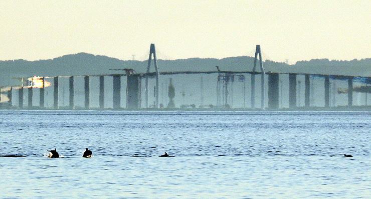 春型蜃気楼で変形して見える新湊大橋。イルカの群れが飛び跳ね、蜃気楼を眺めていた人たちから歓声が上がった=19日午後6時20分ごろ、海の駅蜃気楼近くの海岸から