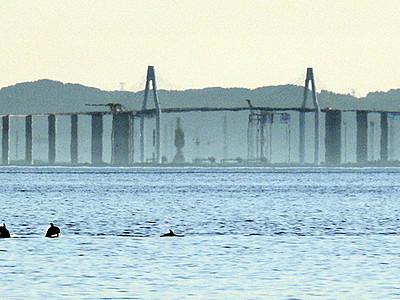 イルカも蜃気楼を見物 魚津でBランク出現