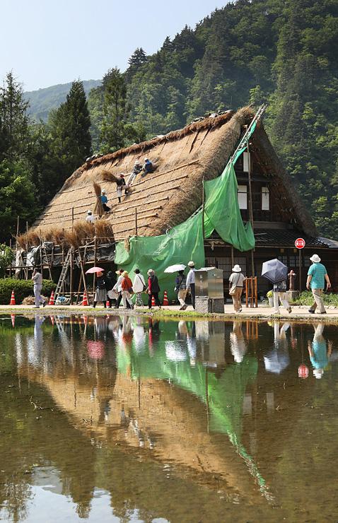 新緑の合掌造り集落で進む屋根のふき替え作業。水田に屋根が映り込んだ=南砺市菅沼