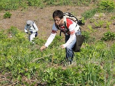山菜袋いっぱい わらび園オープン 阿賀