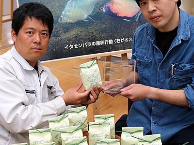 「イタセンパラ米」販売へ 氷見の淡水魚食文化研究会