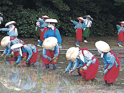 新たな踊り、早乙女田植え 白山・若宮八幡宮で神事