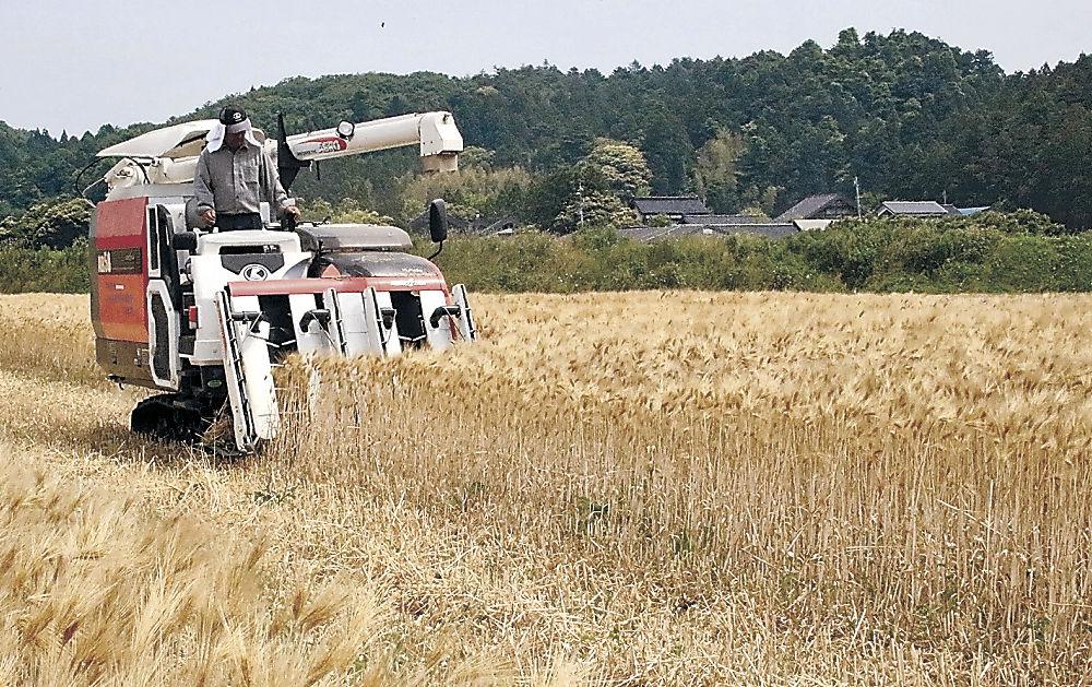 コンバインで大麦を刈り取る生産者=志賀町大坂