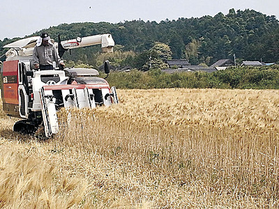 大麦を刈り取り 志賀で収穫始まる