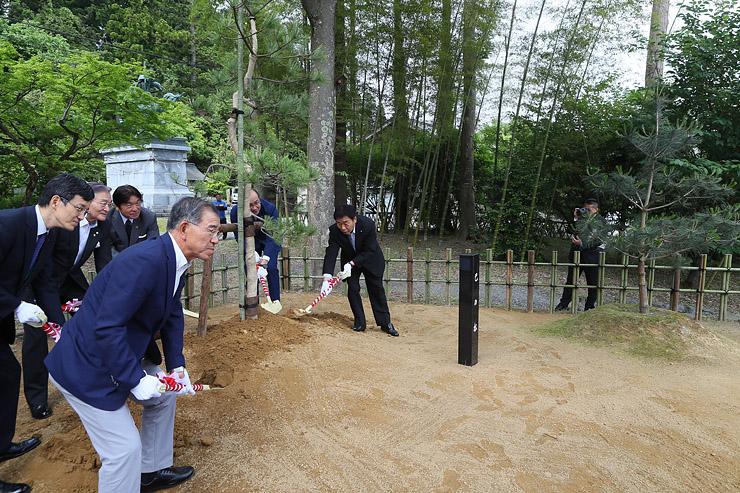 「義仲の松」(右)の横に植えられた「巴の松」の根元に砂をかぶせる桜井市長ら=倶利伽羅源平の郷埴生口