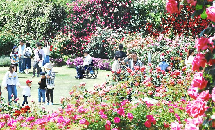 色とりどりのバラが咲き誇り、大勢の人でにぎわう中野市一本木公園=4日