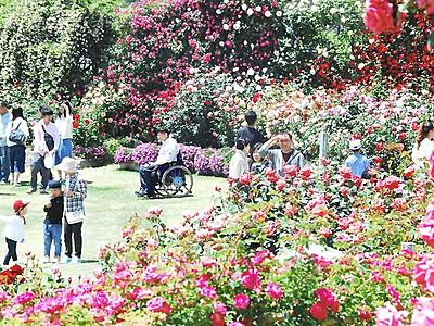 咲き誇るバラ850種 中野・一本木公園