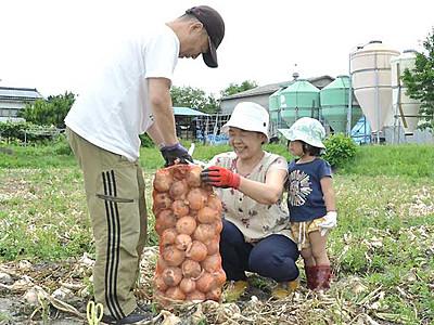 タマネギ直売、安曇野で「祭り」 10・11日、収穫体験も