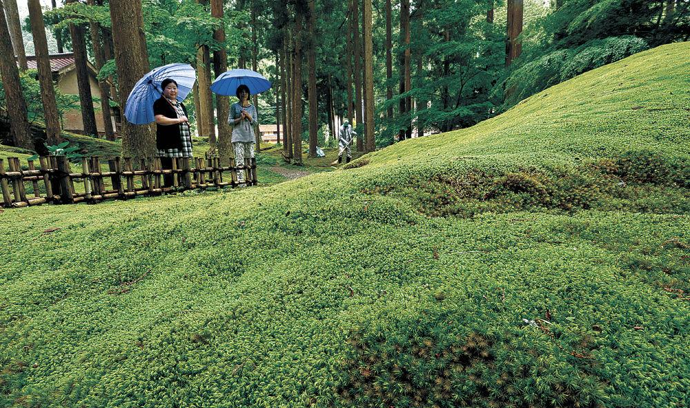 雨にぬれて鮮やかさを増したコケに見入る来場者=小松市日用町