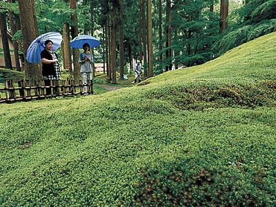 緑のじゅうたん鮮やか 小松・雨の「苔の里」