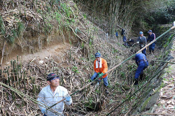 地層を覆う竹を刈って整備を進める住民有志=佐渡市沢根
