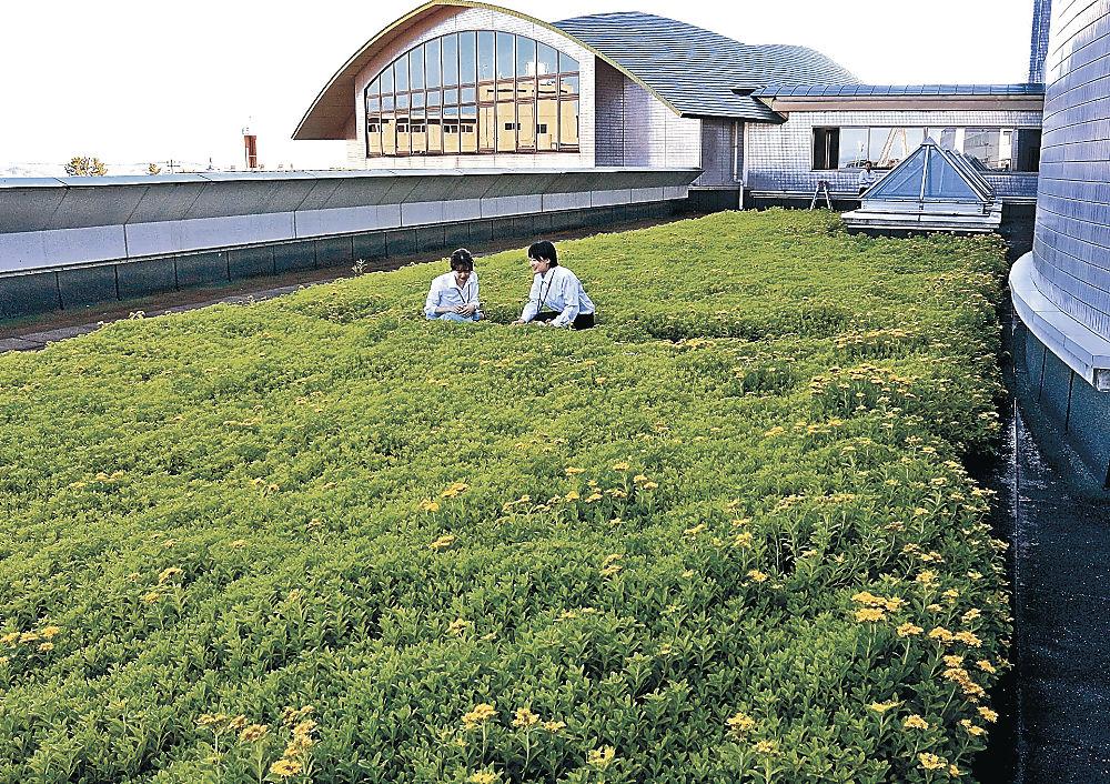 屋上に広がる緑化植物=内灘町役場