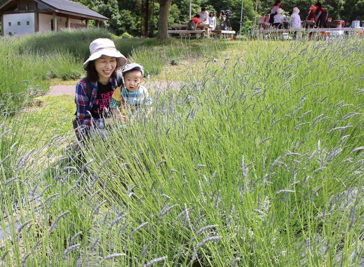 薄紫色のラベンダーの花と香りが楽しめる「あらかわラベンダーフェスティバル」=19日、村上市梨木