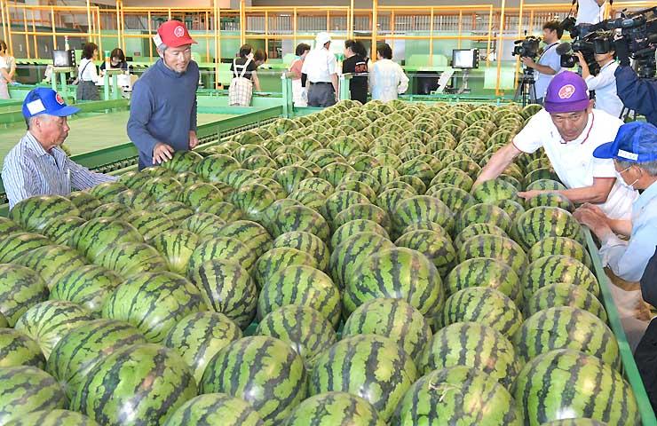 松本市波田のすいか共選所に持ち込まれた多数のスイカ。検査員が傷の有無などを入念に確認した