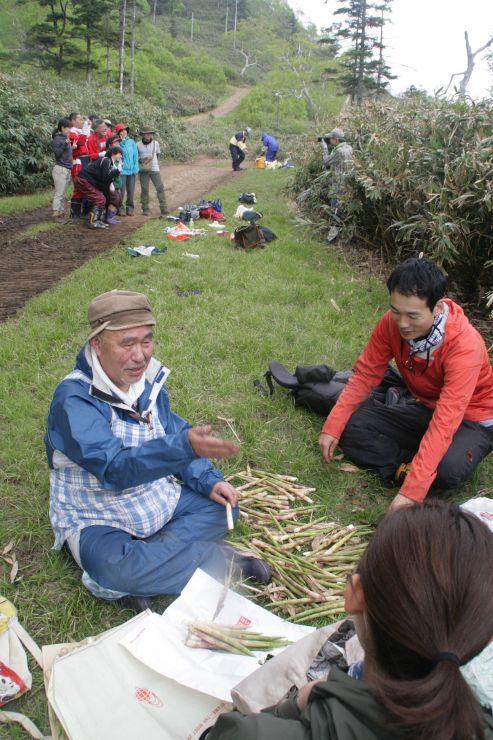 たくさんの山タケノコを採った参加者たち=18日、湯沢町の苗場スキー場