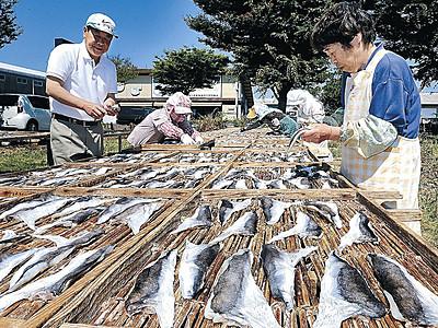 陽光爽やか、フグ天日干し 白山・美川漁港でピーク