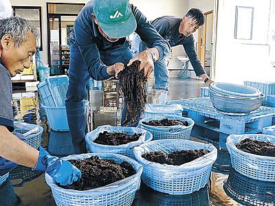 海藻「ウミゾウメン」 外浦の珍味 採取解禁