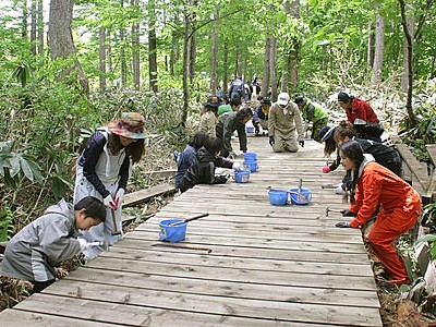 湯沢・7月開催フジロック 木道美しく 住民ら整備作業