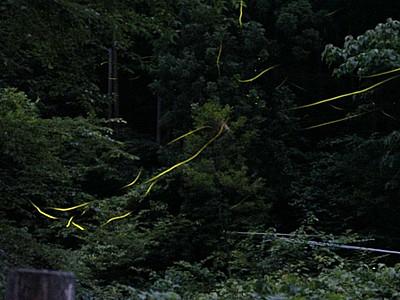 光ほのか川にふわり 岩室温泉ホタル見頃 新潟市西蒲区
