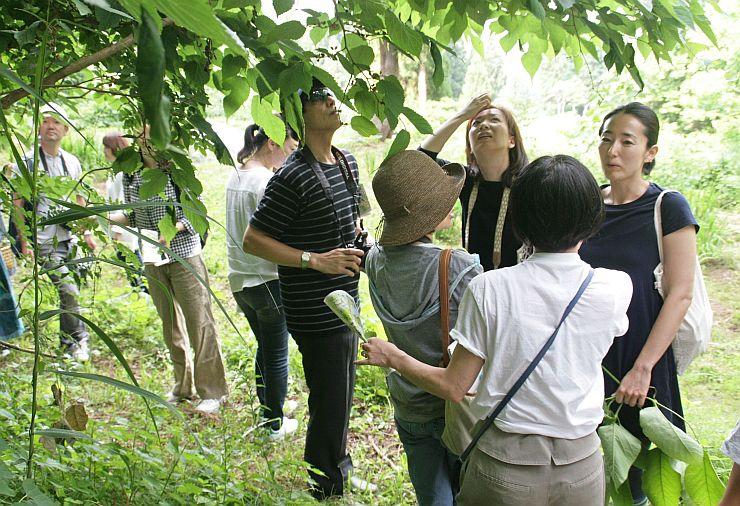 「里山十帖」の食のイベントで山菜の収穫体験をする参加者=南魚沼市大沢