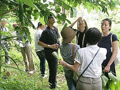 山菜の収穫体験と料理を堪能 南魚沼の宿泊施設