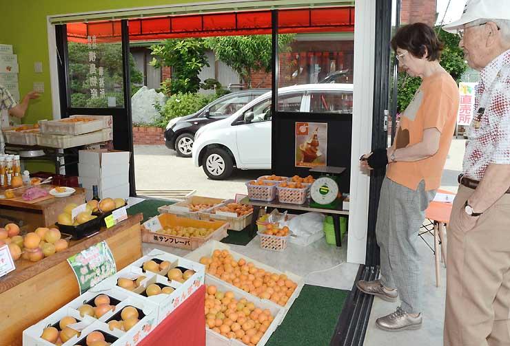 「昭和」や「ハーコット」などさまざまな種類のアンズが並ぶ横島物産の店舗