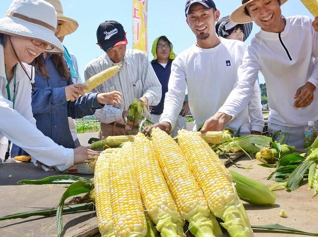 JA越前丹生管内の生産者11人が生産する甘さ抜群の「ニュースイート」=7日、福井市