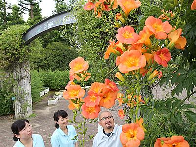 ノウゼンカズラ夏彩る 砺波の県花総合センター