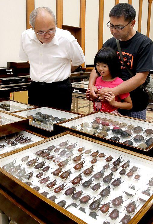 貴重なカブトムシなどの標本が並ぶ「世界の昆虫展」=長岡市幸町2