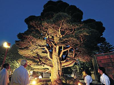 「甦りの五葉松」輝く 石川護国神社でライトアップ