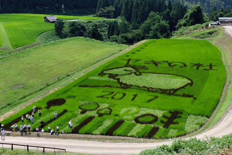 稲の色の違いを利用して浮かび上がった「稲作アート大作戦」