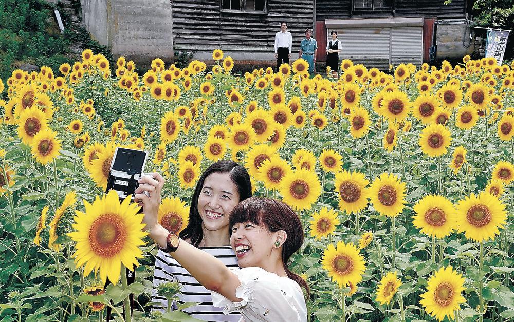 ヒマワリ畑で撮影を楽しむ女性=金沢市平栗