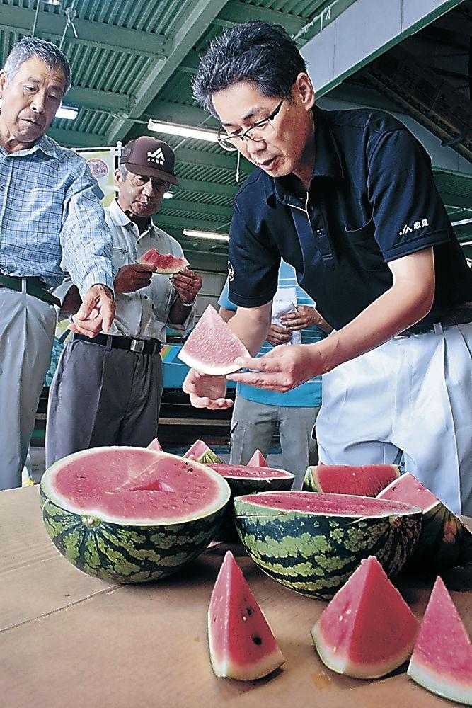 出荷された「能登すいか」=志賀町安津見のJA志賀西山野菜集出荷場